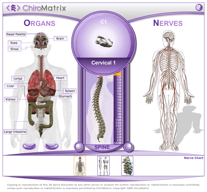 Chiropractic Websites And Marketing Services Chiromatrix 3d